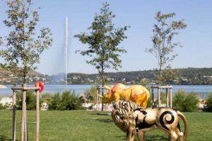 Taxi Istres - Zoo Art Istres